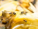 Some experts attribute it to the autumnal chill that has driven the flies indoors in search of warmth and sustenance