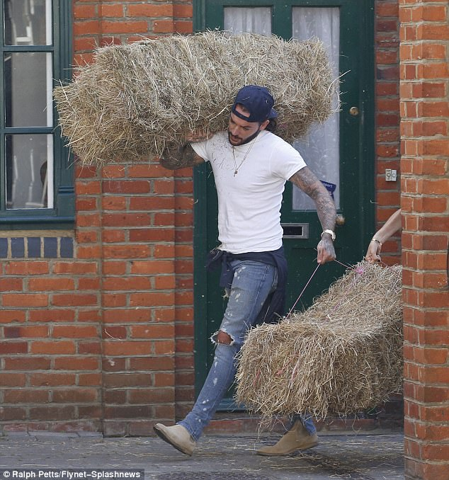 Ever the gentleman: Pete appeared to be doing most of the work as he battled with one hay barrel over his shoulder