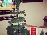 The 'disappointing' Christmas tree as it appeared when Chloe Jones took it out of the box