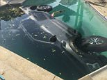 Somehow, this pick-up ended up on its side in a pool, seemingly having smashed through the fence