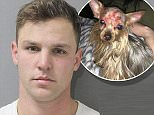 Local authorities say that Samuel Smith (pictured), 24, inflicted severe injuries to the face and head of 'Bitty Boo', a two-year-old Yorkshire terrier