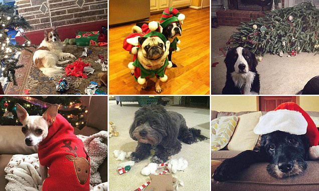 Pets are very unimpressed with the festive season