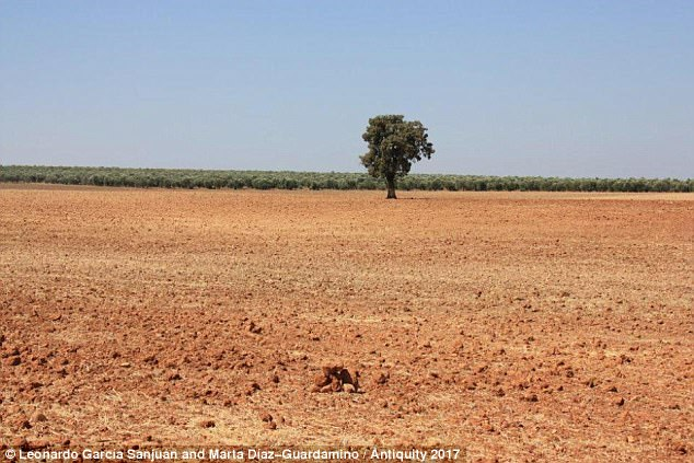 It was first unearthed by a farmer ploughing his field (pictured) in Montoro of southern Spain in 2002 but was dumped at the side of the field and not noticed again until two years later