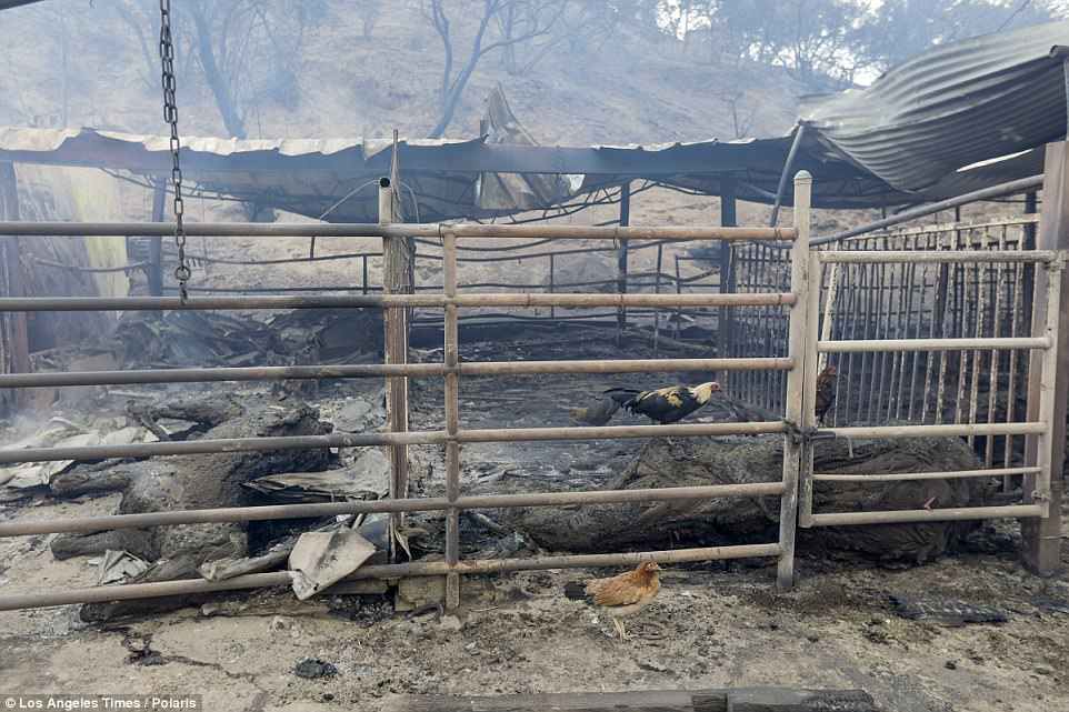 The ranch's owners, who live nearby, were woken by the flames at 3.43am on Tuesday. They were told by firefighters to get out of the area immediately, giving them no choice but to leave the horses in their stables
