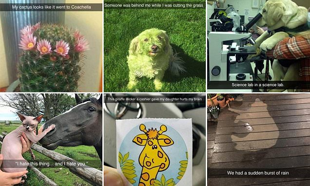 The best Snapchats of 2017 have been revealed