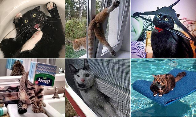 Snaps capture cats getting into all sorts of scrapes