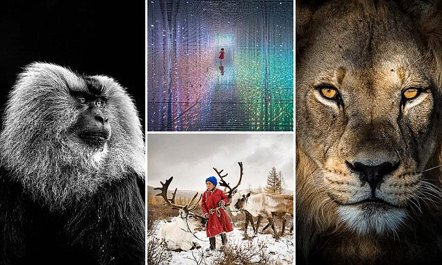 Images competing in the Sony Photography Awards revealed