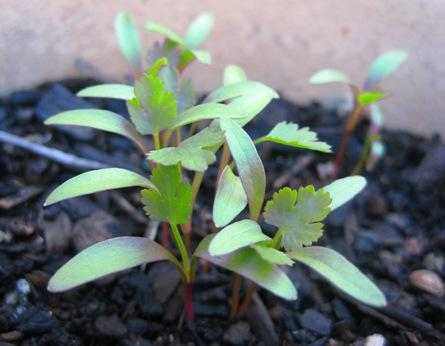 generating seed: