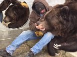 A Kodiak moment: Jim Kowalczik, who owns the Orphaned Wildlife Center in Otisville, New York, is seen in a video posted on February 5, cuddling and petting Jimbo, the Kodiak bear