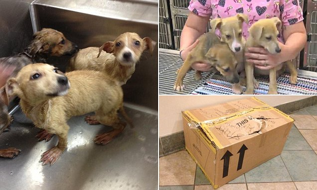 Woman opens sealed cardboard box labeled 'stuff animals' discovering three puppies inside