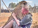 Dolph C Volker, 50, lives in America but volunteers at the Cheetah Experience Breeding Centre in Bloemfontein, South Africa, where he bonded with a male named Gabriel