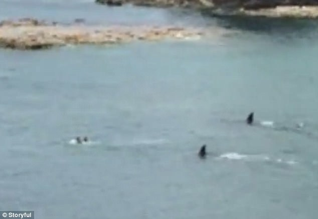 Terrifying footage shows two children (left) desperately trying to swim away from the curious orcas earlier this week (right)