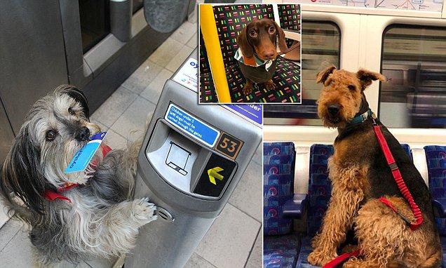 Meet the #dogsonthetube Instagram stars on London's tube