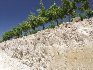 The chalky Albariza soils of Jerez where the best Sherry vineyards are located. (photo credit www.sherry.org)