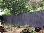 Hidden in this innocent-looking backyard (pictured) in the Sunshine Coast, Queensland, is a huge camouflaged snake
