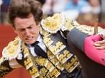 Ouch: Spanish bullfighter Roman is gored by bull during the April Fair bullfighting held at La Maestranza bullring, in Sevilla, southern Spain