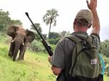 Saving the day: This is the moment when safari guide Dean Oellofse stops a charging elephant in its tracksin the Kruger National Park, South Africa