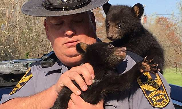 State Trooper holding bear cubs he rescued after their mother died