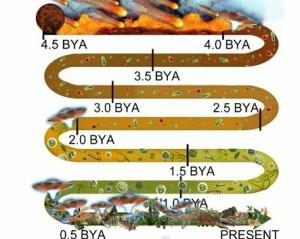 Evolution w saucers Pye