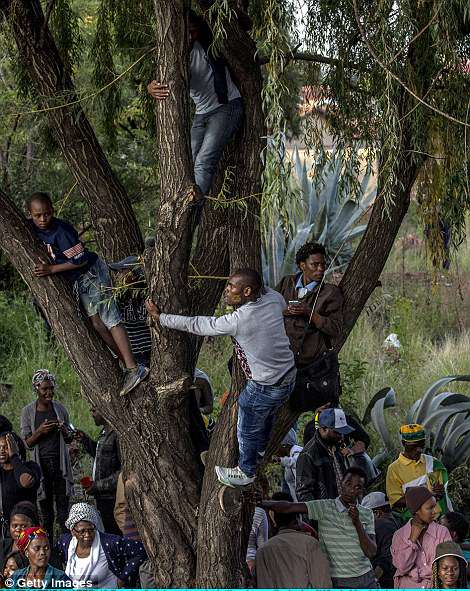 This is another photo which shows people climbing trees so that they can get in to a better position to get a better view of Winnie's body and the procession following it
