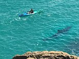 This was the terrifying moment a shark was seen swimming just feet from a kayaker off the coast of Cornwall