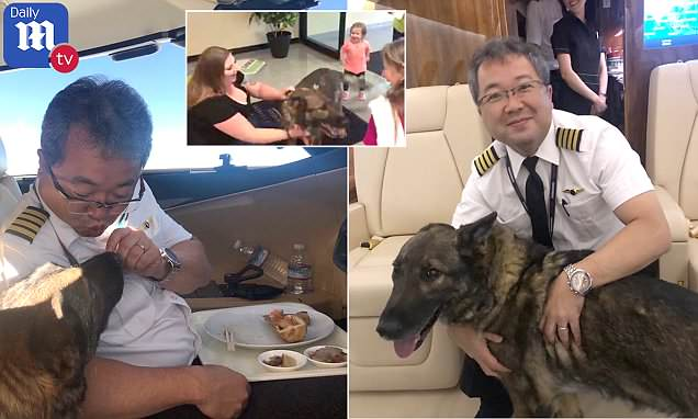 $100k flight home for German Shepherd United Airlines sent to Japan
