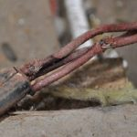 inspection electrical sydney