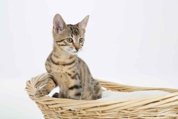 El primer día de un gato nuevo en casa