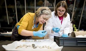Museum of London curators Jackie Keily (left) and Rebecca Redfern examine human bones found in a Roman urn.