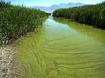 FILE - In this June 12, 2018, file photo, a potentially toxic blue-green algae bloom in Provo Bay in Provo, Utah. Researchers and officials across the country say increasingly frequent toxic algae blooms are another bi-product of global warming. They point to looming questions about their effects on human health. (Rick Egan/The Salt Lake Tribune via AP, File)
