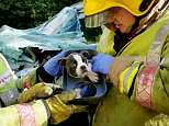 This is the moment firefighters rescued a puppy from the wreckage of a van following a horrific three-vehicle pile-up