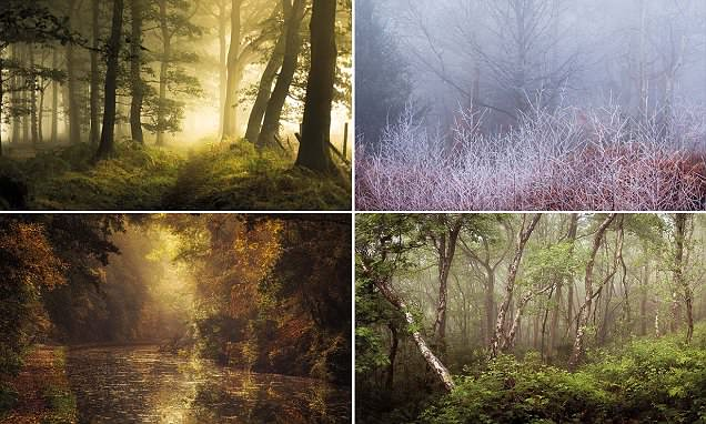 The most enchanting woodland pictures you're ever likely to set eyes on