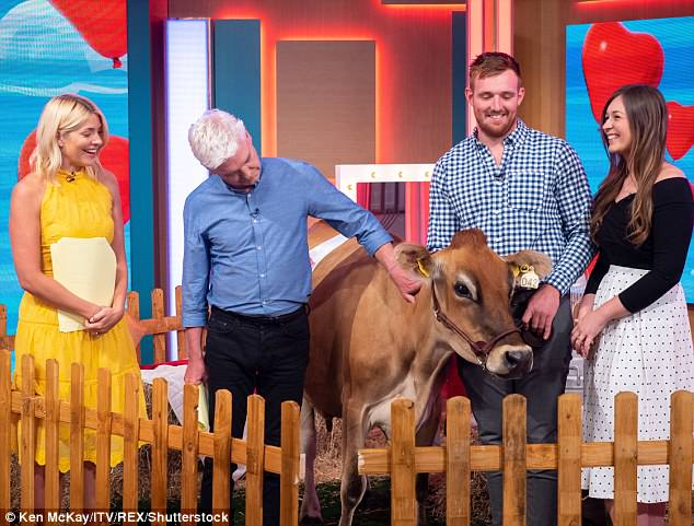 Moooo-tiful: Phil and Holly interviewed a couple whose dairy cow had won a 'beauty contest'
