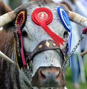 Runners-up Twinkle, from Tetford