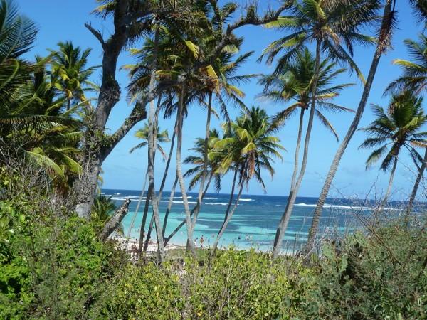 Martinique-2014--12-.JPG