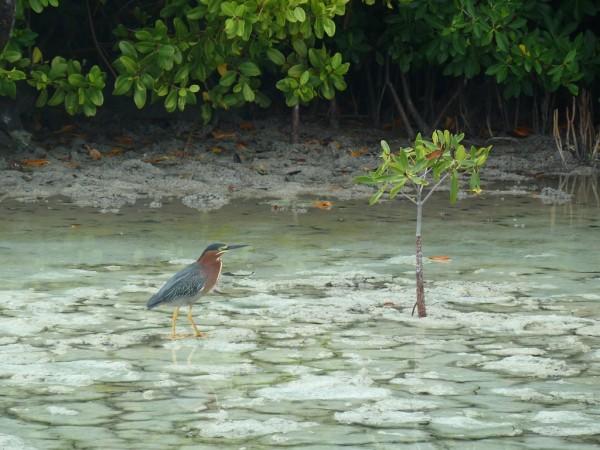 oiseaux-lac-des-Salines--1-.JPG