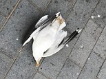 The seagull stole a chip from a man on the seafront who allegedly sought revenge by slamming it against a wall