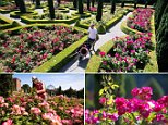 Explosion of colour: Head gardener Spencer Tallis amid the blooms at Hopton Hall in Derbyshire, where he has transformed a derelict site into a stunning display