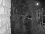 In the clip, caught on CCTV byYael Rose, from West Norwood, south London, the mysterious man leans over the fence with his bag of rubbish