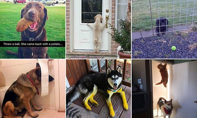 Doggy diaries! Hilarious day in the life of man's best friend