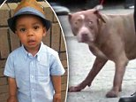 A two-year-old identified by relatives as Jaevon was mauled to death by a trio of pit bulls