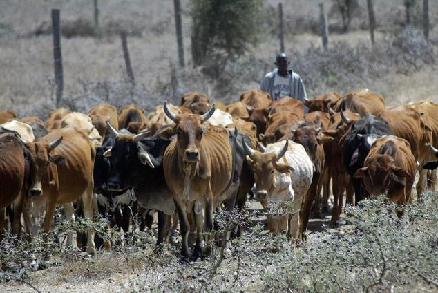 Four days of cattle raids and revenge attacks in northern Kenya have left 75 people dead