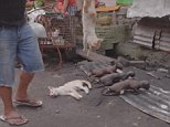 Disturbing video has emerged showing barbecued kittens for sale in an Indonesian market that has ignored orders to stop selling car and dog meat