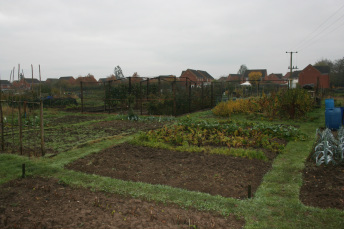 Diss Allotments