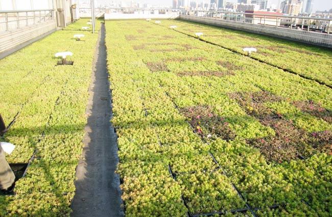 屋顶植物墙01