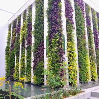 别墅垂直绿化墙