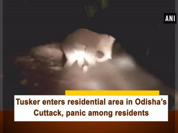 Tusker enters residential area in Odisha's Cuttack, panic among residents