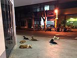 Passers-by pictured the dogs sleeping outside the doors of theSanta Casa Hospital in Cianorte, south Brazil last week