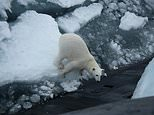 A lone polar bear sits on the ice looking at the RussianDelta IV class submarine that is thought to have been patrollingnorth of the Norwegian islands of Svalbard and Jan Mayen