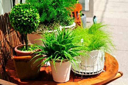 1 - Правила выбора комнатных растений в квартиру